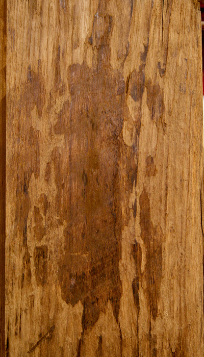 Techtona Hardwood Dimensional Lumber Teak